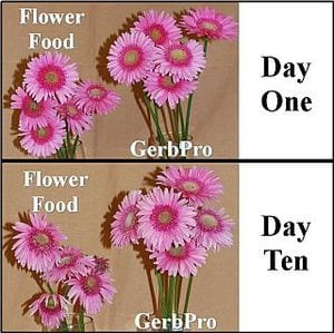 Flower Food, GerbPro Tab Treatment