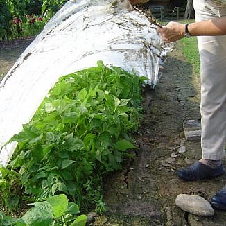 Plant Protection, Floating Row Cover