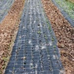 Mulch Film, Biodegradable Mulcc