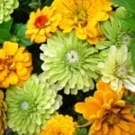 Growing your own Summer Bouquets