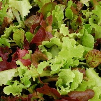 Seed, Organic, Lettuce, Gourmet Mix