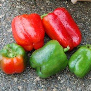 Seed, Organic, Pepper, Bell, California Wonder