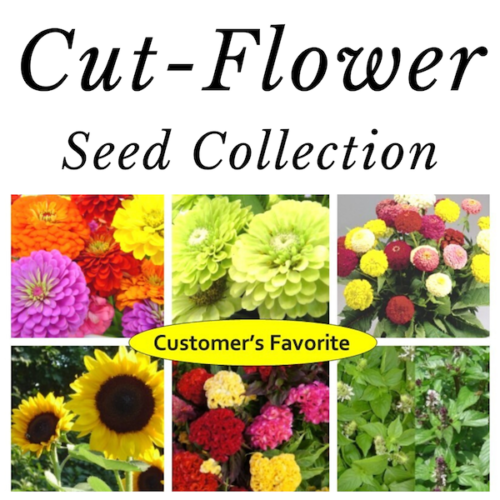 Seed Collections