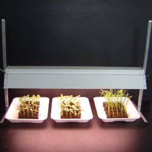 grow light 2