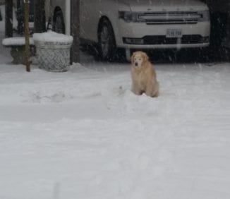 She is done pooping in the snow!
