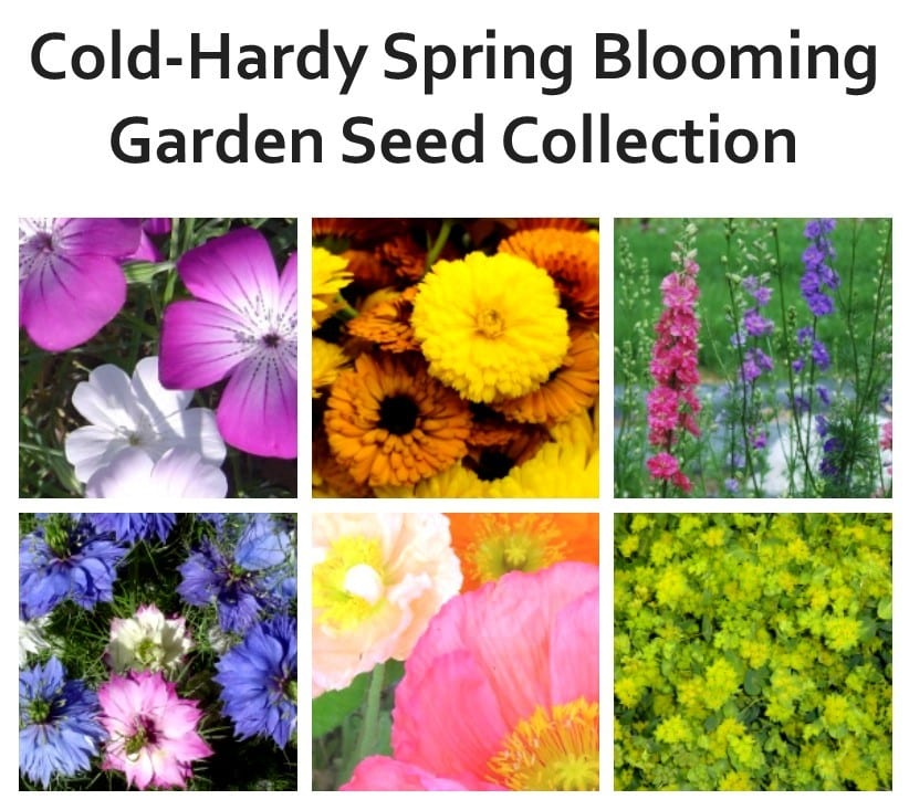 The Trick That Will Keep Your Favorite Flower Alive And: Seed Collection, Hardy Annual Spring Blooming