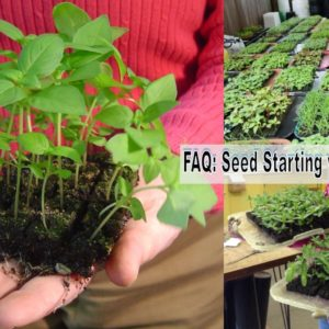 FAQ: Seed Starting with Soil Blocking