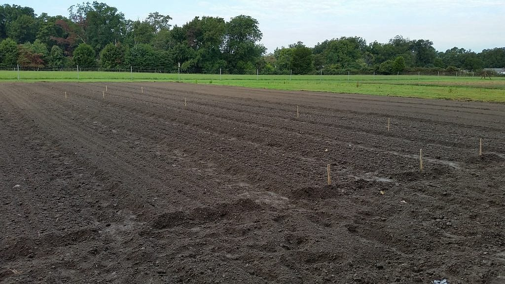 Soil that is a result of years of adding leaf mold, compost and growing cover crops.