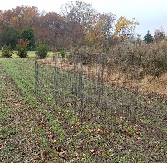 Our cages standing ready for leaves.