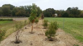 The native trees and shrubs were planned by a professional landscape designer with long term goals in mind.