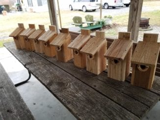 A line of house for our feathered friends!