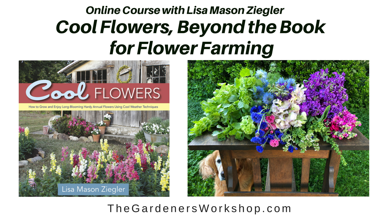 Cool flowers beyond the book for flower farming the gardeners view lisas online course introduction video izmirmasajfo