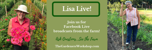 Join Lisa for Facebook Live!
