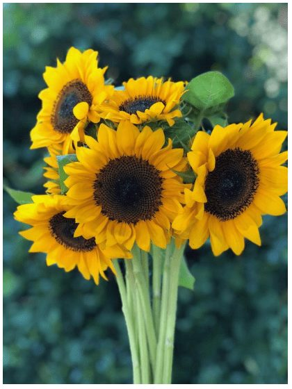 Sunflowers never seem to go out of style.